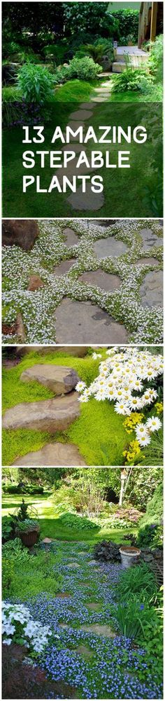 Gardening, home garden, garden hacks, garden tips and tricks, growing plants, gardening DIYs, gardening crafts, popular pin, backyard hacks, backyard tips and tricks, stepable plants