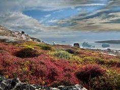 Las tundras comprenden las regiones Norte de Alaska, Canada y Rusia. Para que una porción de tierra pueda ser considerada tundra, debe reunir dos importantes requisitos. El más importante, tener el suelo helado permanentemente. Y, el segundo, debe haber muy pocos árboles, por no decir ninguno.
