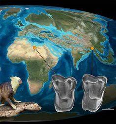 Afrasia djijidae Out of Asia Leluhur Manusia