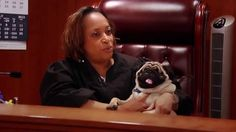 Sabrina Johnson, a district court judge in Michigan, recently adopted Mikey, a blind Pug. Watch this video to learn more about the heartwarming adoption story. Happy Stories, Feel Good Stories, Interesting Stories, Dog Pictures, Funny Pictures, Animal Pictures, Humane Society Volunteer, Animal Law, Old Pug