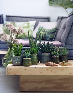 6 plantes increvables pour celles qui n'ont vraiment pas la main verte - Elle Décoration