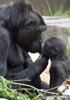 Je t'aime mon bébé et surtout N'arrête PAS de faire le singe ! / TumbleOn