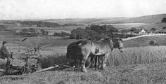 Tour Scotland Photographs: Old Photograph Harvesting Old Deer Scotland