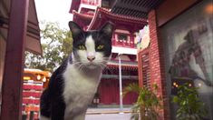 シンガポールの街角で出逢ったネコ。