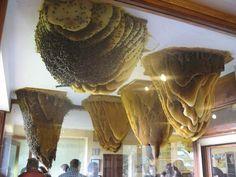 Het bijenmuseum in Poyales del Hoyo
