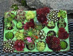 Miniature gardens 2015