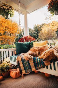 Photo Deco, Autumn Aesthetic, Christmas Aesthetic, Autumn Cozy, Cute Animal Photos, Cute Dogs And Puppies, Doggies, Cute Little Animals, Autumn Inspiration