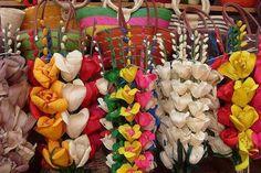 Resultado de imagem para hojas de maiz