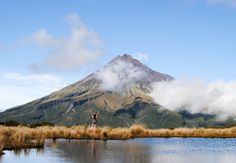 13 important things you should know, so you can travel New Zealand like a local