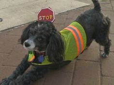 DoggieDiscussions | Crossing Guard Dog Keeps Children Safe | http://www.doggiediscussions.com