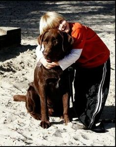 The Labrador is so popular because many people trust him to be a hero around kids.