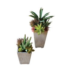 High Desert Potted Plants - Set of 2