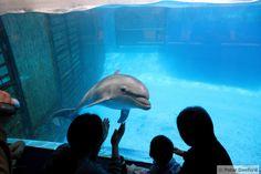 Beijing Zoo Aquarium