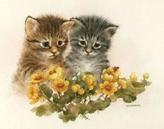 images of giordano kittens | Found on pussycatdreams.centerblog.net