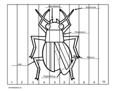 BUGS AND INSECTS -  Emma's Place Bug Activities, Bugs And Insects