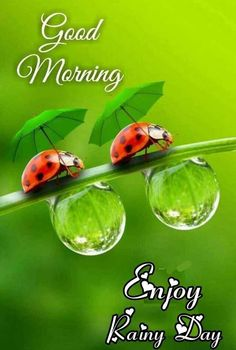 Good Morning Rainy Day, Good Morning Images, Good Night, Caleb Y Sofia, Morning Greeting, What Goes On, Happy Day, Ohana, Love Quotes