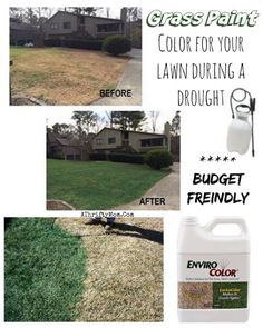 Save water and paint your lawn green, great options for those who are in a drought, budget freindly too