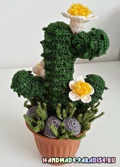 Цветущий кактус крючком
