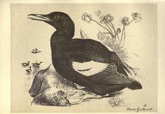 Birds from Moidart and elsewhere /. Edinburgh :David Douglas,1895.. biodiversitylibrary.org/page/22541994