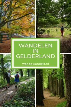 De Veluwe en de Achterhoek behoren tot mijn favoriete wandelgebieden in Nederland. Maar Gelderland heeft nog veel meer moois te bieden qua mooie wandelroutes. Het land van Maas en Waal, de Gelderse Vallei en Berg en Dal. Genoeg te ontdekken dus! Hier deel ik de mooiste wandelingen in Gelderland  #WandaWandelt #wandelen #wandelroute #gelderland #wandeleningelderland #geldersestreken Hiking Tours, Hiking Trails, Holland, Walkabout, Best Hikes, Dog Photos, Places To See, Netherlands, Travel