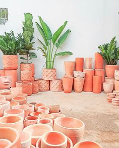"Terracotta Fever 🧡🔥 on Instagram: ""Wishing we were here 🧡🔥 Photo by @acvarellvietnam . . . Featured by @dearestnature / Tag us (@terracottafever #terracottafever) for a…"" Tropical Plants, Plant Decor, Terracotta, Succulents, Planters, Instagram, Succulent Plants, Plant, Window Boxes"