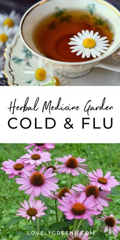 Garden Beds Almost 30 herbal remedies for the cold and flu. Includes info on how they are used and tips on adding them to your herbal medicine garden Natural Add Remedies, Natural Remedies For Migraines, Cold Home Remedies, Natural Antibiotics, Natural Healing, Natural Skin, Natural Foods, Healing Herbs, Natural Treatments