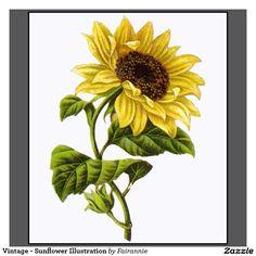 vintage_sunflower_illustration_shirts-r3c42b3a0a60c40348bf1cd371e31b4c0_ilkwf_1024.jpg (1104×1104)