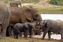 """Heavy sigh... (CNSNews.com) Pres Obama has directed Atty General Holder, Secretary of State Kerry & Interior Secretary Jewel to co-chair a Cabinet-level task force aimed at stopping wildlife trafficking in Africa. """"[I]t is in the *national interest* of the [U.S.] to combat wildlife trafficking,"""" says the executive order, which Obama signed in Tanzania last week...Obama also directed U.S. State Dept to provide $10 million in training & technical assistance to help Africa stop wildlife…"""