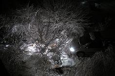 Snow Artist, Night Photos, 1st Christmas, Fine Art America, Instagram Images, Canvas Prints, Park, Artwork, Pictures