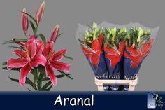 Aranal