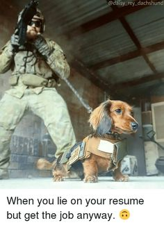 Brave little dog!