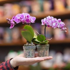 Types Of Orchids, Moth Orchid, Replant, All The Colors, Indoor Plants, Garden Landscaping, Planting Flowers, Flora, Exotic