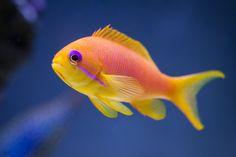 Reef Aquarium, Saltwater Aquarium, Colorful Fish, Tropical Fish, Beautiful Sea Creatures, Under The Ocean, Marine Fish, Exotic Fish, Ocean Life