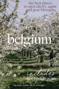 Belgium travel guide to finding the best blossom spotting locations in Haspengou… – Best Europe Destinations Europe Destinations, Europe Travel Guide, Amazing Destinations, Travel Guides, European Vacation, European Travel, Travel Advice, Cool Places To Visit, Orchards
