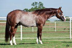 Shine On Line Quarter Horse Reining Horses, Friesian Horse, Andalusian Horse, Draft Horses, Arabian Horses, Appaloosa, Palomino, Dressage, Horses And Dogs