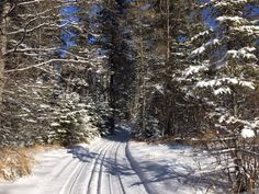 """Stay Warm While Getting Your """"Nature Fix"""" in the Trees - TreesMendUs"""