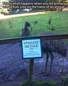 This is what happens when you let primary school kids vote on the name of an animal at the zoo.
