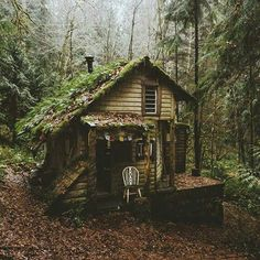 Tag who you'd stay with 🏡 Surrounded by nature in this enchanting cottage 🍃 Olympic National Park, Washington, U. Ideas De Cabina, Cabin In The Woods, Cottage In The Woods, Forest House, Forest Cottage, Forest Cabin, Cozy Cottage, Cabins And Cottages, Log Cabins
