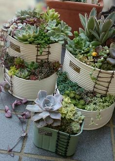 mini garden Amazing Succulents Garden Decor Ideas - Page 30 of 44 - LoveIn Home Types Of Succulents, Succulents In Containers, Cacti And Succulents, Planting Succulents, Terrarium Cactus, Garden Art, Garden Design, Inside Plants, Succulent Gardening