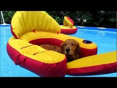 Check this Out! Golden Retriever Dogs in Pool! living a dog's life! Love My Dog, Puppy Love, Perros Golden Retriever, Golden Retrievers, Funny Animal Videos, Dog Videos, My Animal, Mans Best Friend, Dog Life