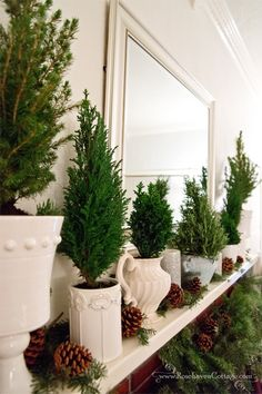 """Living trees mantle Christmas decor (Rosehaven Cottage). Tree types (outside to center): """"Dwarf Alberta Spruce"""" (Picea glauca 'Conica'); """"Ellwood Cypress"""" (Chamaecyparis lawsoniana 'Ellwoodii'); """"European Tree"""" (also marked Chamaecyparis lawsoniana 'Ellwoodii'); Center """"tree"""" is rosemary cut in a conical form. Cut greens and garland are fir."""