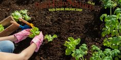 The Ins And Outs of Companion Planting
