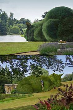 Shaping Garden shrubs into animals called is called Topiary. It's very popular in England. I found this batch of pictures tonight, thought other cat folk might enjoy them. Topiary Garden, Garden Art, Topiaries, Amazing Art, Awesome, Amazing Nature, Land Art, Hedges, Beautiful Gardens