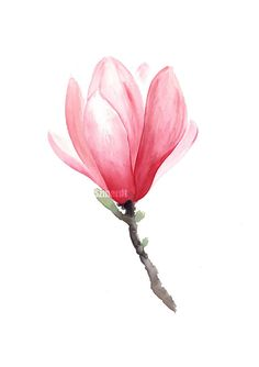 Magnolia Painting Mother's Day Gift Idea Floral by ColorWatercolor  Marta Honzatko