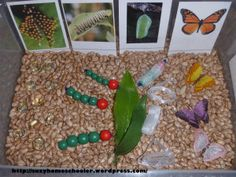 10 Butterfly Themed Sensory Bins from Suzy Homeschooler (5) life cycle of a butterfly sensory bin