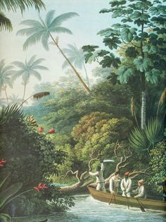 Land and People, Oscar Canstatt 1871 British Colonial Decor, Scenic Wallpaper, Jungle Art, Tropical Landscaping, Motif Floral, Botanical Prints, Graphic, Abstract, Drawings