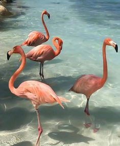 How to Visit Flamingo BeachHow to Visit Flamingo Beach What the Flock? Yes, you read that correctly, Flamingo beach is a real thing! I don't know about you, but pink flamingos. Flamingo Beach, Pink Flamingos, Flamingo Photo, Flamingo Art, Pink Beach, Bedroom Wall Collage, Photo Wall Collage, Picture Wall, Aesthetic Backgrounds