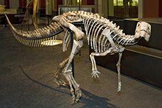 Dysalotosaurus lettowverbeki, Museum für Naturkunde Berlin