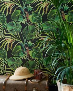 A funny green jungle leaf wallpaper design that is on a colored background with . A funny green jungle leaf wallpaper design that is on a colored background with . Tropical Wallpaper, Colorful Wallpaper, Green Leaf Wallpaper, Monkey Wallpaper, Wallpaper Jungle, Jungle Bedroom, Monkey Bedroom, Extra Image, Downstairs Toilet