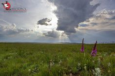 Wildflowers in the Dullstroom Highlands. I Am An African, 23 November, Kruger National Park, Highlands, Wildflowers, Clouds, Mountains, Travel, Animals